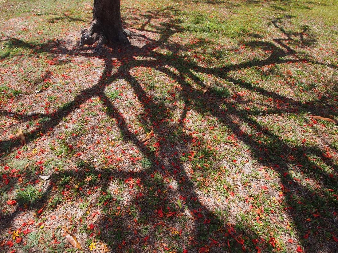 Shadow confetti